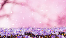 Abstract Floral Background Lil...