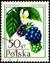 Dewberry On Postage Stamp