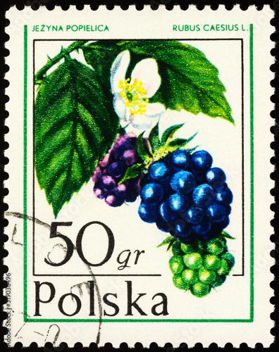 Fototapeta Dewberry on postage stamp