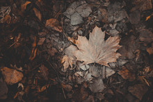 Brown Frozen Leaves And Bark O...