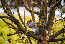 Squirrel And Bird Feeder On A ...