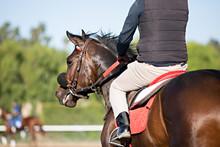 Racehorse Headshot
