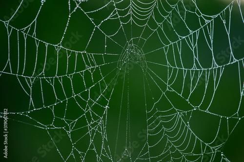 Obraz na plátně Close-Up Of Wet Spider Web