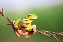 Close-Up Of Frog On Twig