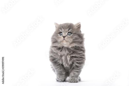 Little kitten goes on a white background Wallpaper Mural