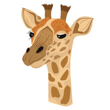 Vector Giraffe Isolated White ...