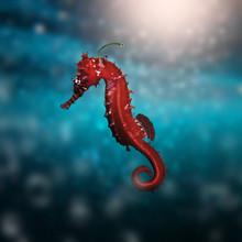 Seahorse Chili