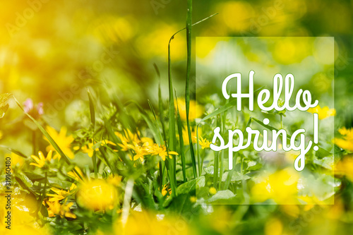 Hello Spring phrase in the frame Wallpaper Mural