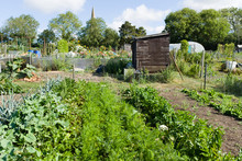 Allotments, Community Gardens
