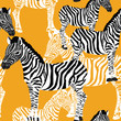 Zebra's seamless pattern. Vector illustration of zebras on orange background