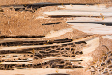 Close Up Termites Nest Backgro...