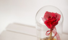 Closeup On Handmade Enchanted Rose In Glass Dome Bell. The Rose Is Red And The Pedestal Is Gold. Behind Is A White Background.