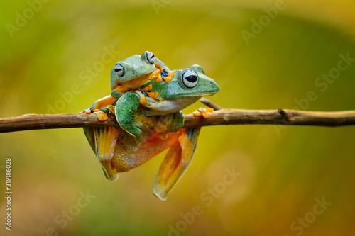 Canvas Print Close-Up Of Frogs On Branch