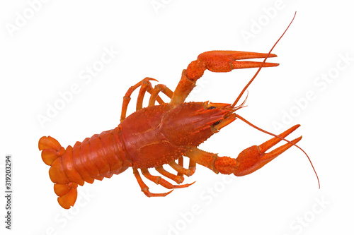Fotografiet Red boiled crayfish isolated on white background