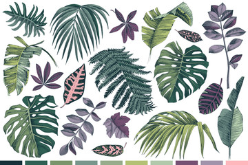 Hand drawn set of tropical leaves and plants