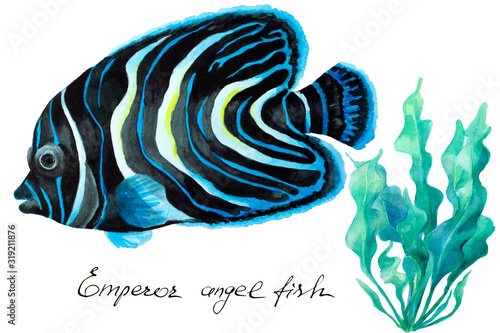 Emperor angelfish (Pomacanthus imperator), hand drawn watercolor. Canvas Print