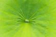canvas print picture - Lotusblatt als Textur im Durchlicht, Bali