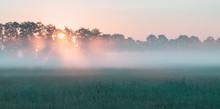 Sunbeams Through Trees In Mist...