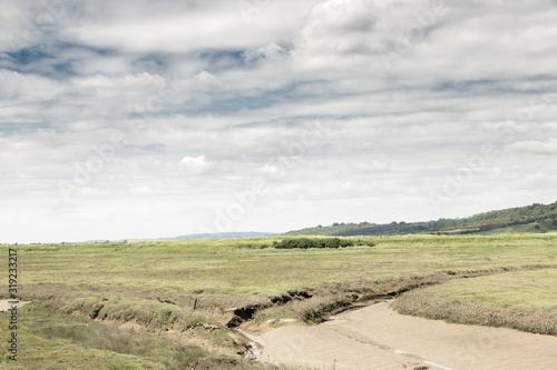 Vászonkép grean marshland landscape