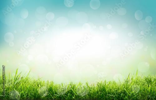 Valokuvatapetti A natural spring garden background of fresh green grass and blurred blue sky bok
