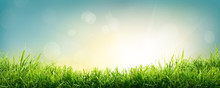 A Natural Spring Garden Background Of Fresh Green Grass With A Bright Blue Sky And Sun.
