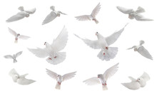 Collage Free Flying White Dove Isolated On A White