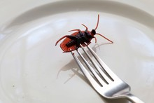 Bugs On A Plate.Insects As Foo...