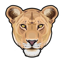Lioness Animal Cute Face. Vector African Wild Lion Cat Head Portrait. Realistic Fur Portrait Of Lioness