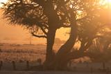 Fototapeta Sawanna - afrkański krajobraz z drzewem o zachodzie słońca
