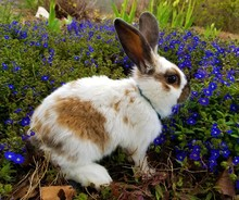 Adorable White And Brown Spotted Bunny Rabbit In Flower Bed