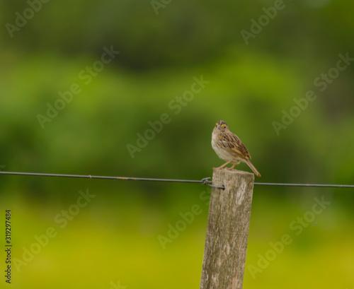 Photo Pájaro Gris posado en poste de alambrado