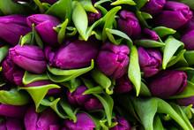 A Bouquet Of Purple Tulips Lie...