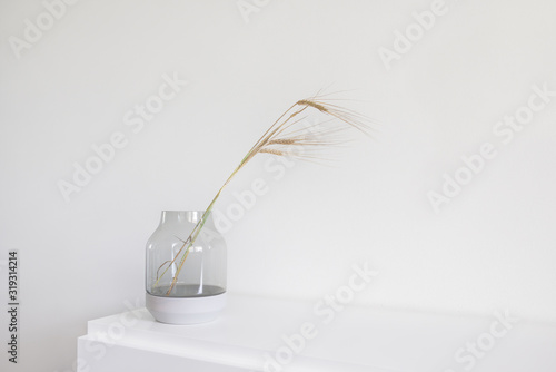 Fototapeta Fresh barley bunch decorated in glass vase on a white wooden chest of drawers. Modern minimalist scandinavian interior design. obraz
