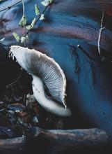 Mushroom Growing From Wood