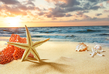 FototapetaStarfish and shells on the beach. Sunrise over the sea. Waves on the seashore.