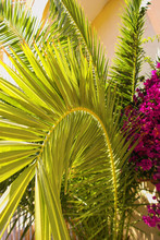 Palm Tree Branch And Flowers O...
