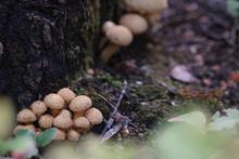 Close-up Of Mushrooms Under Th...