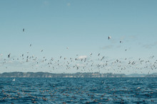 Flock Of Sea Gulls During A Workup Off The Coast Of New Zealand