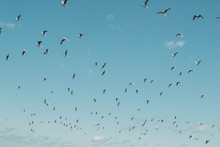 Seagulls Flying During A Workup Off The Coastline