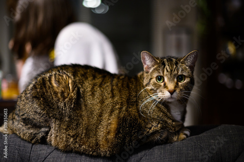 Cat on couch arm