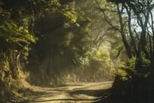 Dusty Road In New Zealand Bush...