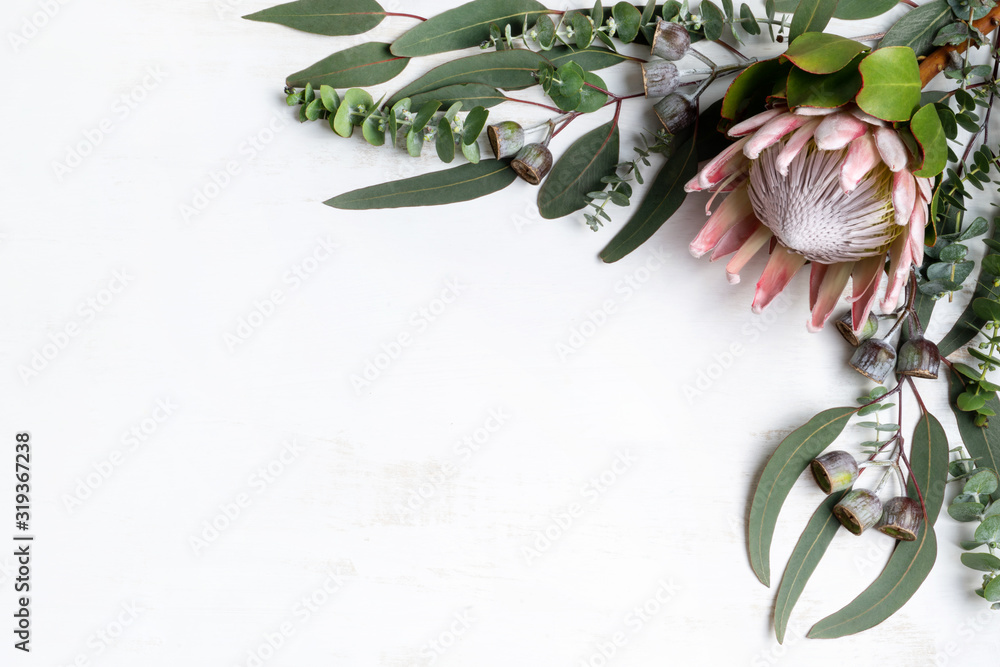 Fototapeta Beautiful pink King protea surrounded by Australian native eucalyptus leaves and gum nuts, creating a floral border, photographed from above, on a white background.