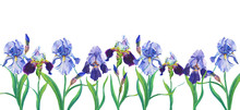 Blue And Violet Irises. Waterc...