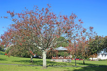 Bandstand In A Park In Autumn