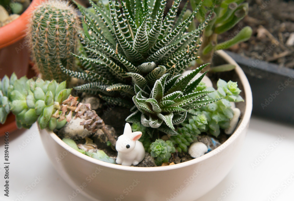 Fototapeta Different succulents in one white cup on the windowsill. Little ceramic rabbit in flowers