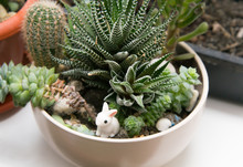 Different Succulents In One Wh...