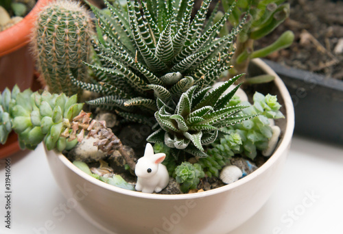 Fototapeta Different succulents in one white cup on the windowsill. Little ceramic rabbit in flowers obraz