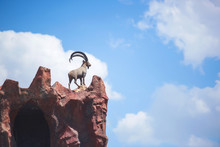 Sculpture Of A Mountain Goat On An Artificial Mountain Rock In Zoo. Mountain Goat On Top Of A Cliff. The Zoo Of The City Of Shymkent In Southern Kazakhstan