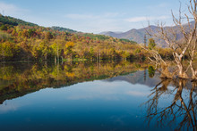 Autumn Landscape At Sunny Day With Blue Calm River, Dried Trees Protruding From The River With Branches Reflecting In The Water, Colorful Autumn Forest And Blue Sky With White Clouds In The Background