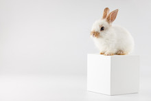 Bunny Rabbit At White Cube On ...